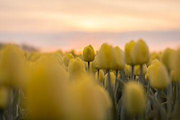 Der Gelbe von Max ter Burg Fotografie