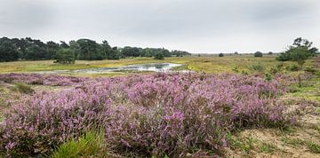 Heide-Landschaft von Hennie Zeij