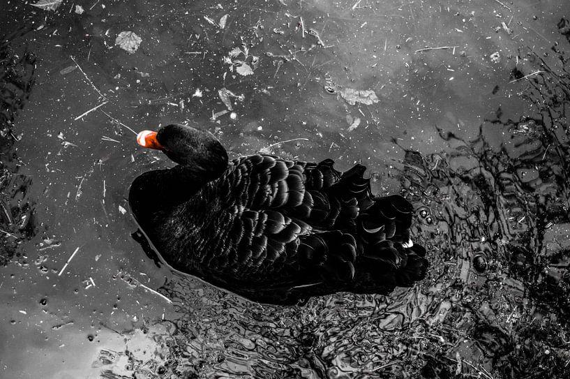 Zwarte zwaan van Daniëlle Beckers
