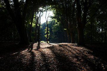 Bosgebied bij Valkeveen van
