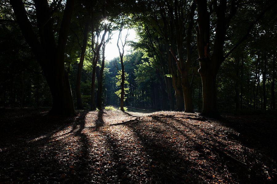 Bosgebied bij Valkeveen