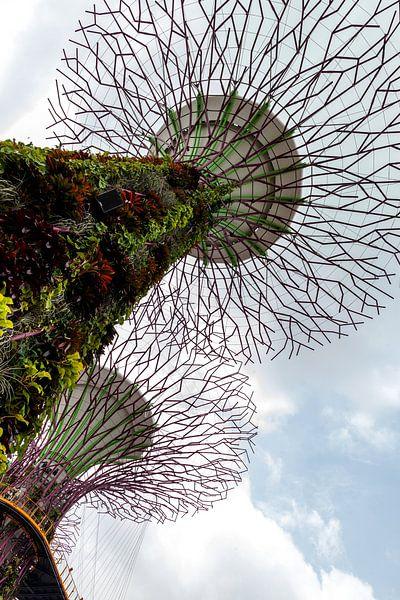 Moderne architectuur in de botanische tuin in Singapore. van Eyesmile Photography