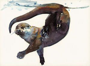 Otter in Bewegung