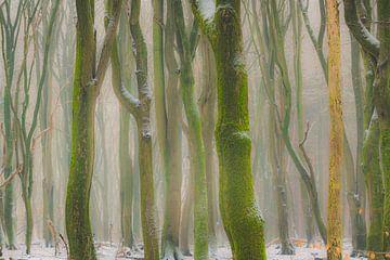 Beukenbomen met dramatische vormen in een mistig bos met sneeuw van Sjoerd van der Wal