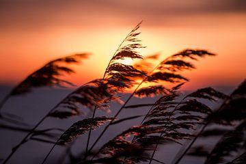 Warmer Sonnenuntergang an einem kalten Wintertag von Koen Hoekemeijer