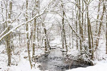Winters bos met beekje van Guido Rooseleer