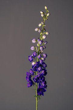 Geburt einer Blume (blau) von michel meppelink