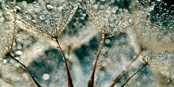 Dandelion Rainy Day van Julia Delgado
