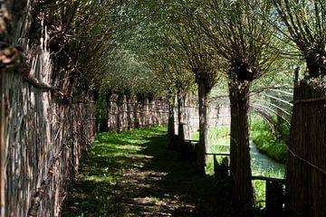 eendenkooi in de Biesbosch van joas wilzing