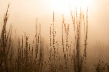 Wildpflanzen im Nebel von Tania Perneel