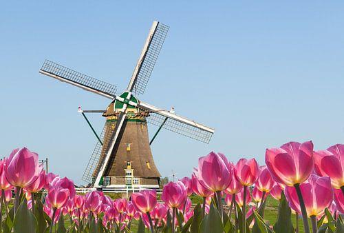 Hollandse windmolen,  blauwe lucht,  voorgrond met bloeiende tulpen