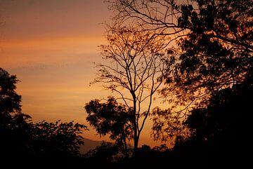 Scherenschnitt-Bäume am Nachthimmel von MM Imageworks