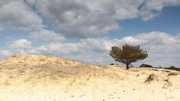 Dennenboomje op zandduin van Dick Doorduin
