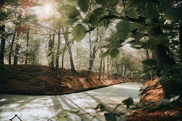 Herbstfarben im Wald von Thomas Kuipers