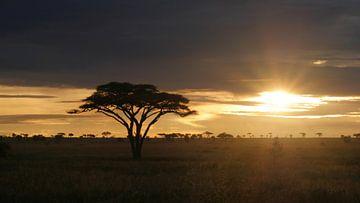 Zonsopkomst in Afrika op de savanne in Tanzania van Robin Jongerden