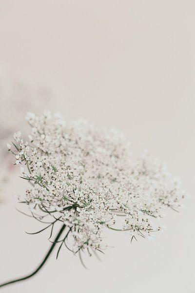 Vlierbloesem tak - pure white van Aminda