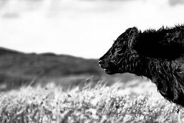 Koe op Texel. von Robert Poort