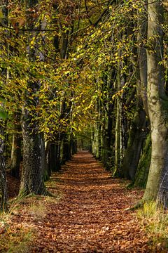 Herfstsfeer in het bos von Bart van Dinten