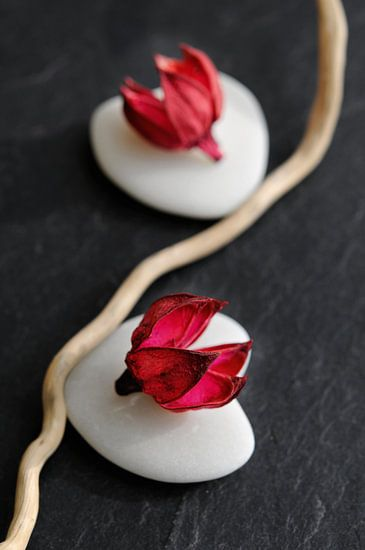 Fleurs de galets van Martine Affre Eisenlohr