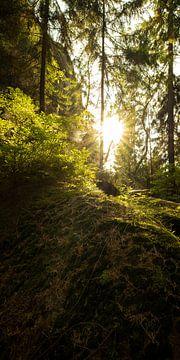 Sonnenuntergang im Wald von Stefan Schäfer