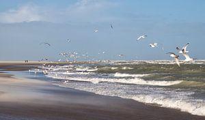 Aan de Zeeuwse kust van