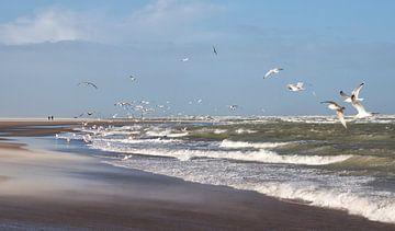 Aan de Zeeuwse kust sur peter reinders