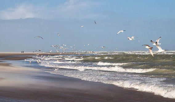 Aan de Zeeuwse kust