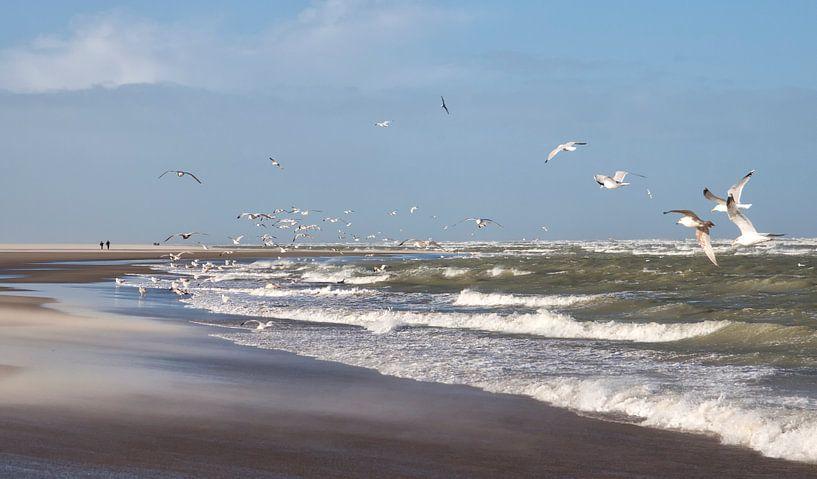 Aan de Zeeuwse kust van peter reinders