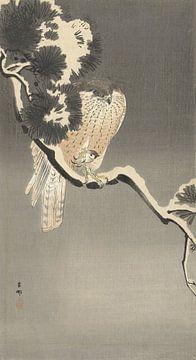 Falke mit Spatz von Ohara Koson