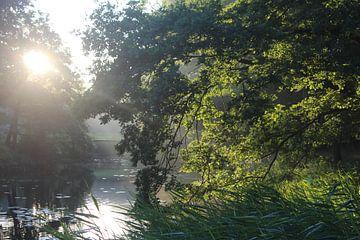 Zonsopkomst in het bos van Natasja van Dwingelen
