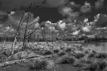 Schwarz und weiß Landschaft Broekpolder von Marcel van Berkel