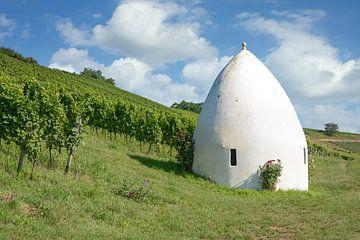 Wijngaardidylle van Peter Eckert