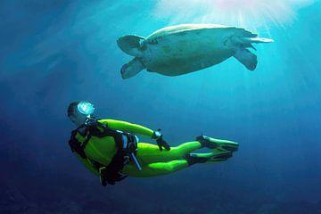 Merel en de schildpad