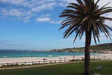 Palme am Strand von Quinta Dijk