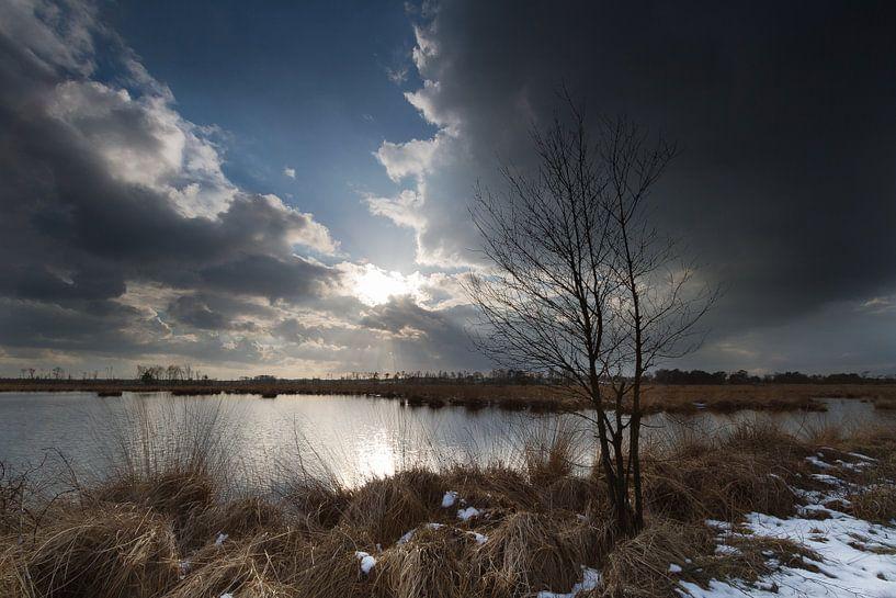 Ven en berken op de Heide van Ingrid Van Damme fotografie