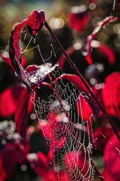 Spinnennetz von Rob Boon