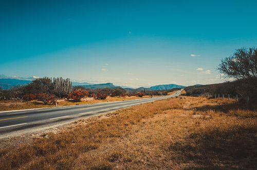 Snelweg naar Oaxaca van Joris Pannemans