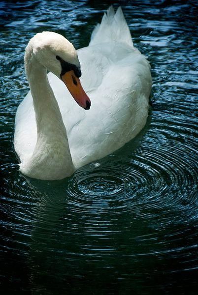 Swan drop van Mariska Hofman
