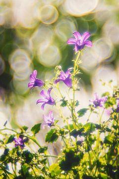 Retro voorjaarsbloemen