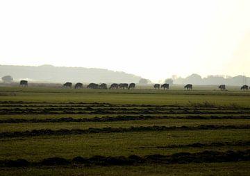Schlaglochzeit auf dem friesischen Land von hetty'sfotografie