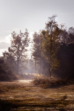 Winter op de Heide van Inez VAN DE WEYER