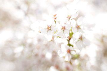 Witte bloesem van Renske Schut