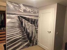 Photo de nos clients: Têtes de piquet noires et blanches sur Zeeland op Foto, sur fond d'écran