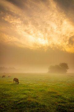 Schaapjes in de mist van Ard Jan Grimbergen