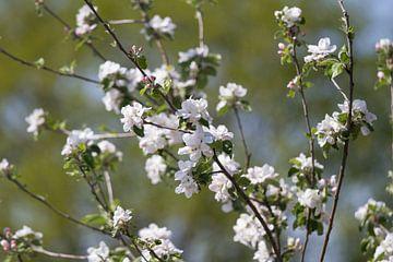 Frühling! von DigiDiede - Fotografie