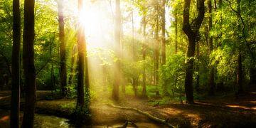 Idyllischer Sonnenaufgang im Wald mit Sonnenstrahlen im Nebel von Günter Albers