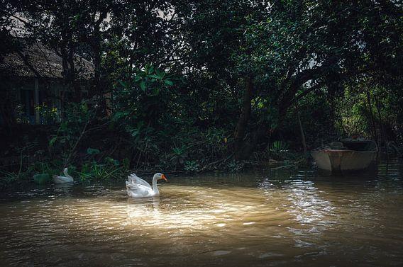 De verlichte zwaan van Joris Pannemans