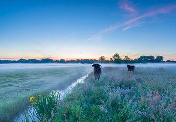 Kühe bei Sonnenaufgang von Marcel Kerdijk