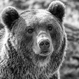 Portret van een beer van Menno Schaefer