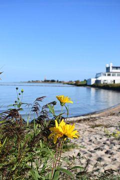 Bloemen voor het IJsselmeer van Hindeloopen Natuurlijk